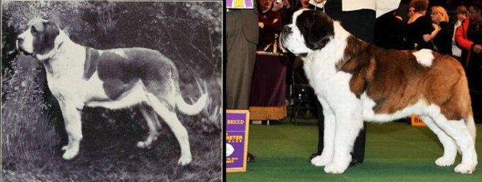 100 Years of Breed Improvement Science of Dogs