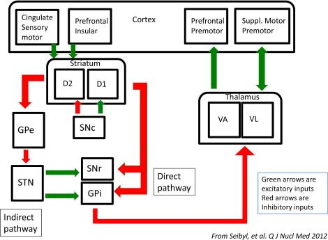 Schematic of Direct and Indirect Pathways Seibyl 2012.  Quarterly Journal of Nuclear Medicine and Molecular Imaging 2012 February:56(1):4-16