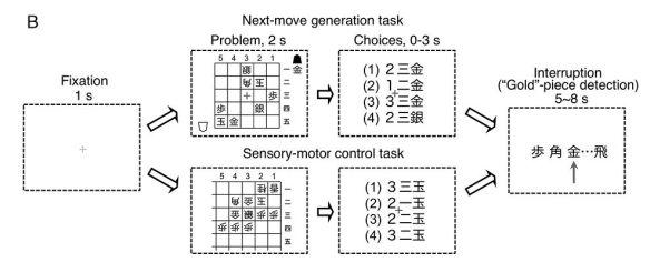 Caudate - shogi test