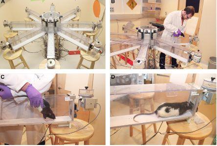 Current Biologydx.doi.org/10.1016/j.cub.2013.01.055