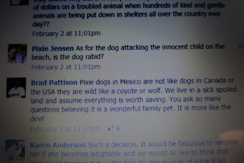 Pattison comments on street dogs