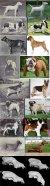 From the top: Bulldog, GSD, Pug, St. Bernard, Dachshund, St. Bernard skull (1850/1967), Bull Terrier skull (1931/1976)