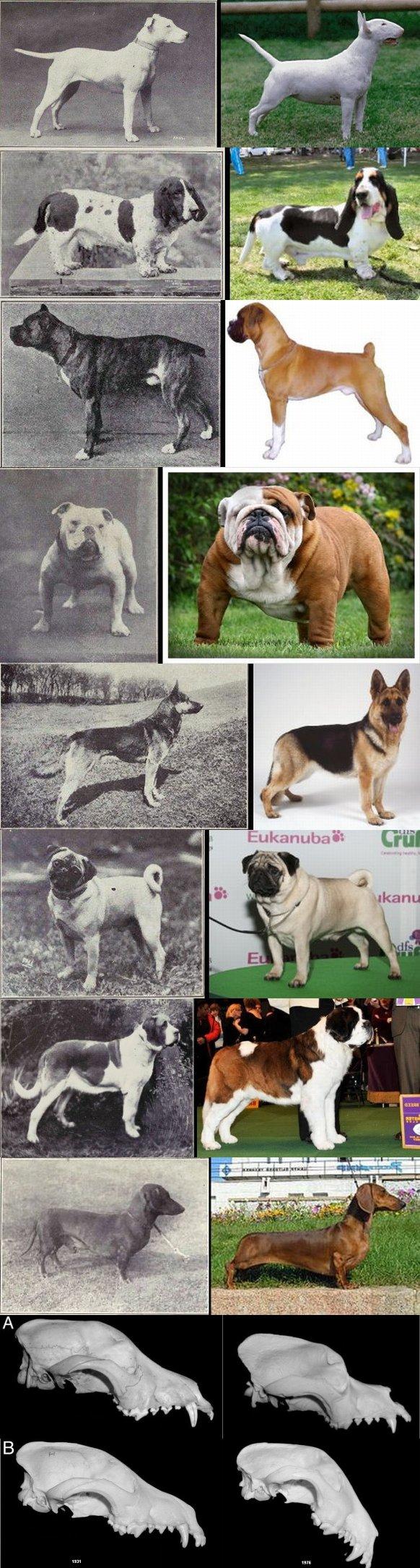 Evolution Naturally Dog Food Puppy